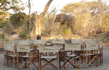 Elephant roaming around the camp